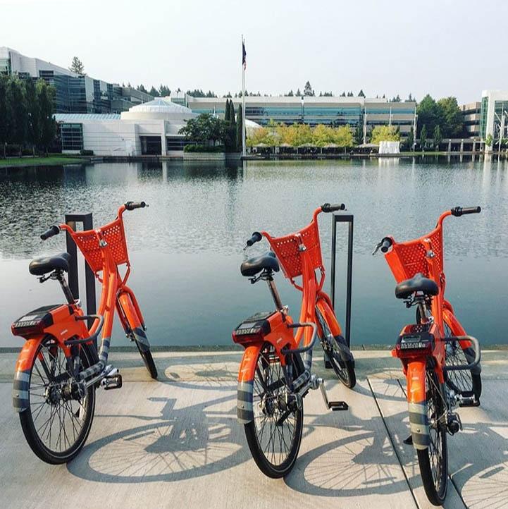 bikes parked by a lake on Nike's campus, Nike internship