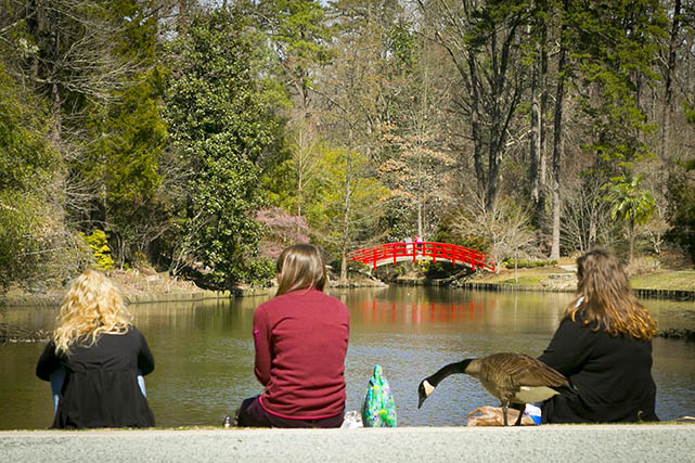 three students sitting and chatting in front of a pond and the signature bridge in Duke Gardens, one of the spots that helped Robyn feel at home in Durham
