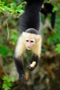 A monkey from the vacation I took during my MBA preparation