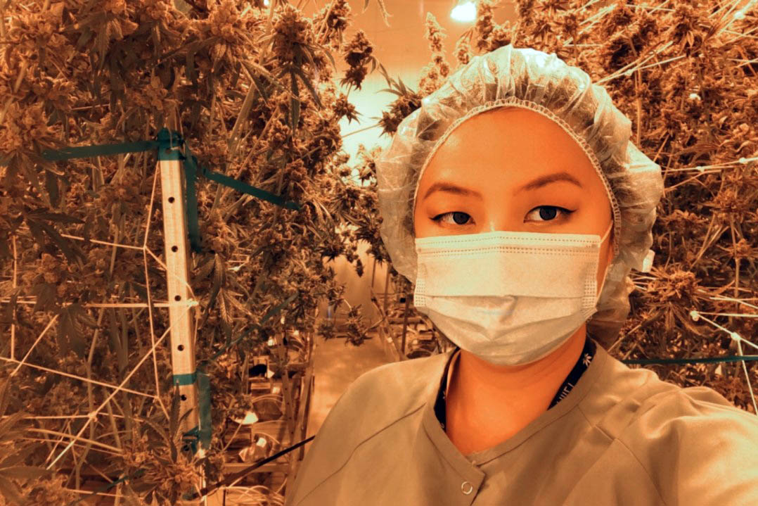 Charmaine in scrubs and a mask with cannabis plants in the background; career in cannabis