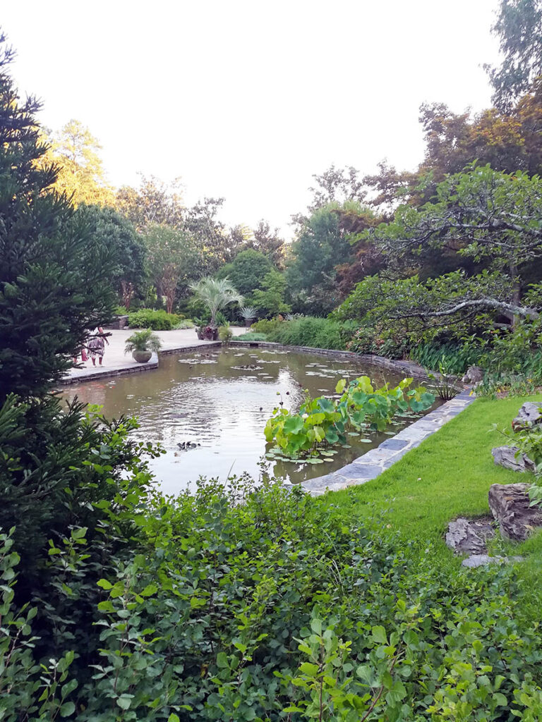 a pond in Duke Gardens, one of Rohma's favorite study spots